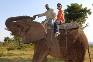 Elephant Back Safari's at Kwa Madwala